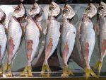 竹筴魚處理方法
