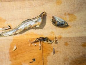 日式小鱼干高汤